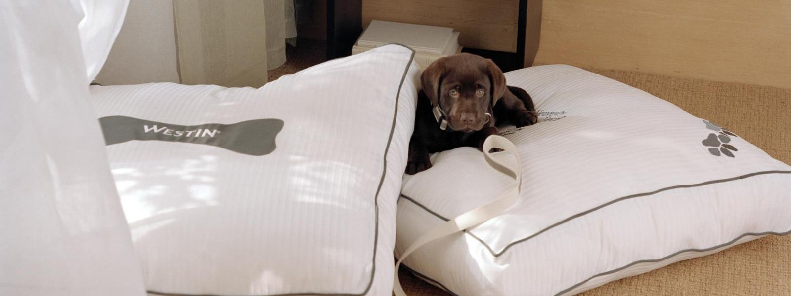 pet friendly hotels in orange county - westin heavenly dog bed